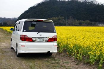 笠岡菜の花畑第2駐車場1.JPG
